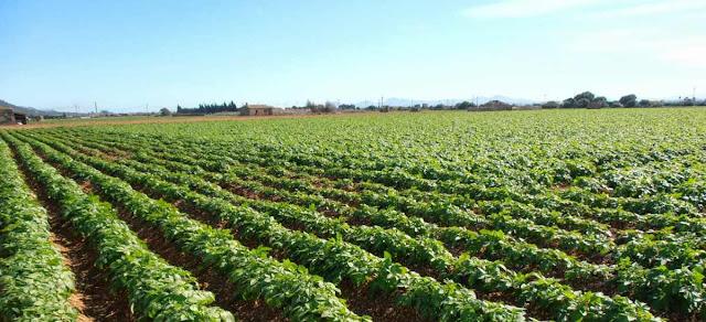 Agricultura y economia