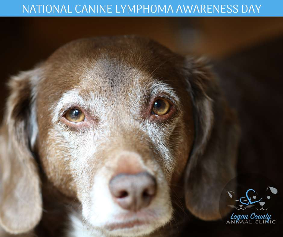National Canine Lymphoma Awareness Day Wishes Lovely Pics