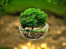 Doğanın da Hisleri Olduğunu Biliyor muydunuz?