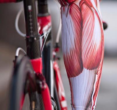 Licra con anatomia de los músculos humanos impresos.