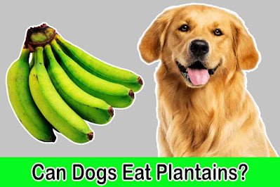 Can dogs eat plantains, Can dogs have plantains, Plantain for dogs