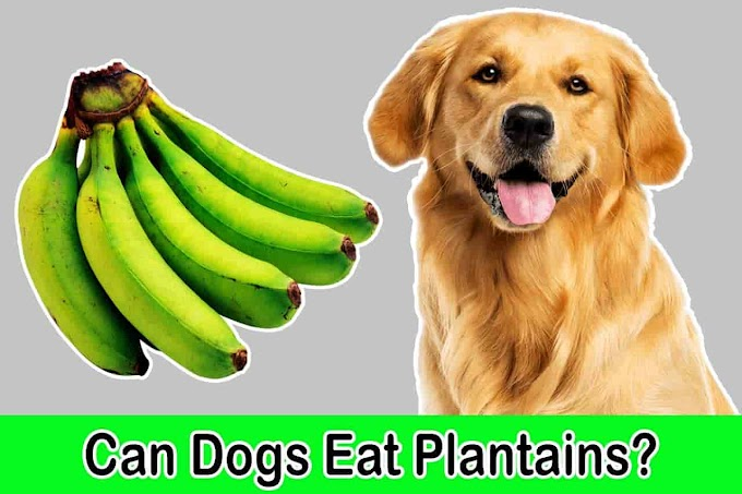 [2021] Can Dogs Eat Plantains or Banana | Are Plantains Good for Dogs