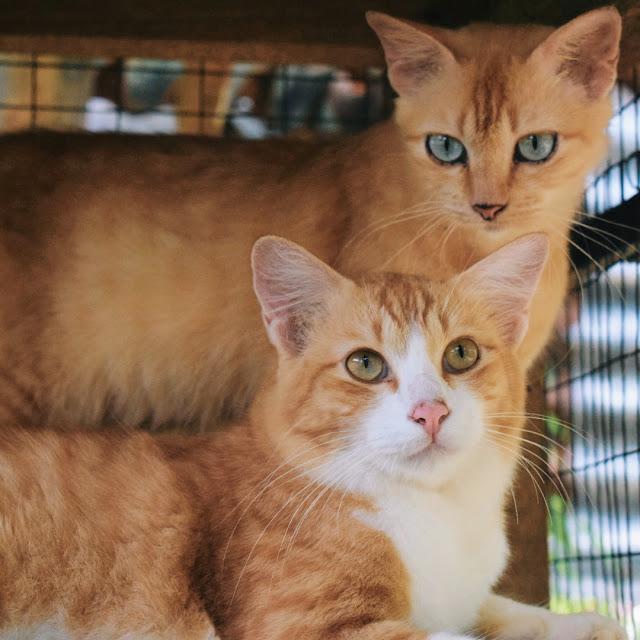 Penyakit Kucing Yang Bahaya dan Boleh Mendatangkan Maut