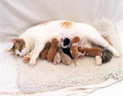 usia perkembangan anak kucing kittens.jpg