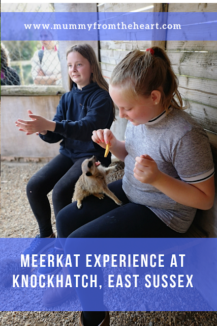 Meerkat experience at Knockhatch pin
