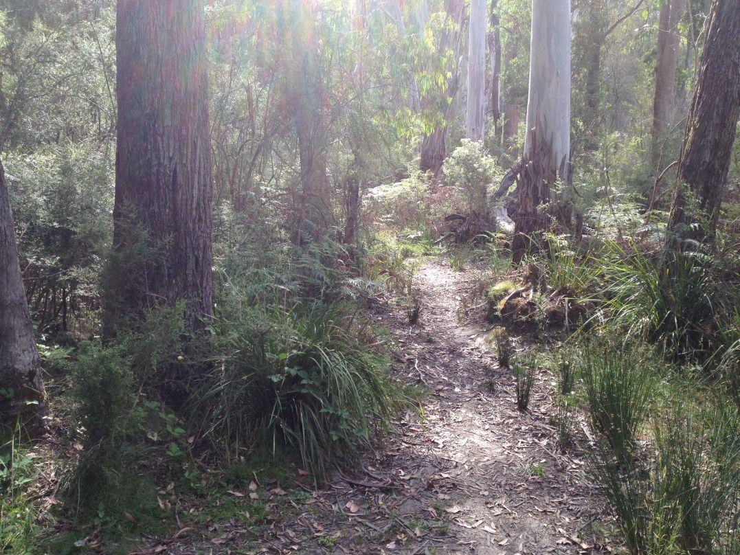 sugarloaf track meet