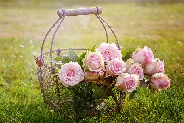 Gambar Bunga mawar dalam keranjang