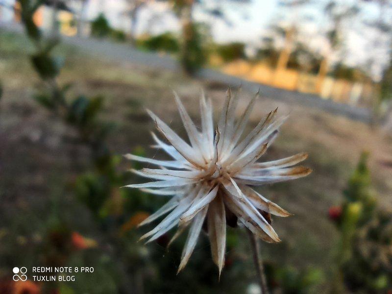 Hasil Foto Kamera Super Macro Xiaomi Redmi Note 8 Pro
