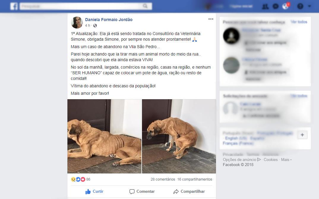 Encontrada à beira da morte, cadela abandonada na vila São Pedro se recupera em Pinhal