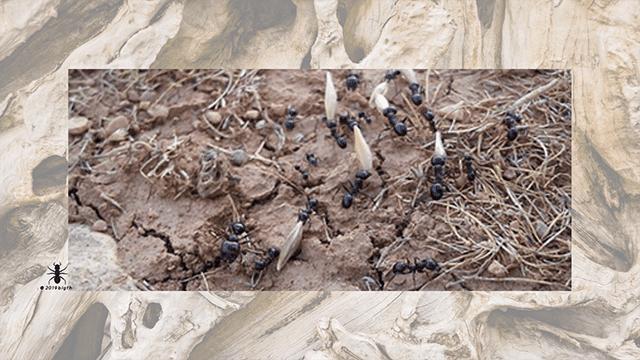 ✅las-hormigas-aladas-voladoras