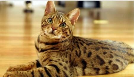 Kucing Bernyawa 9, Benarkah? Ini Dia Penjelasanya