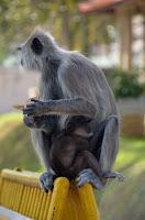 knuffig - cute - Jaya Sri Maha Bodhi