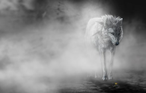 The dog in world: wolf wallpaper very great