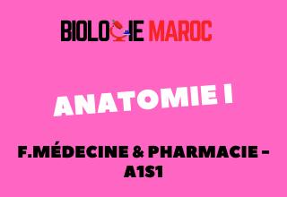 Cours Anatomie I pdf A1S1 FMP -Médecine Pharmacie