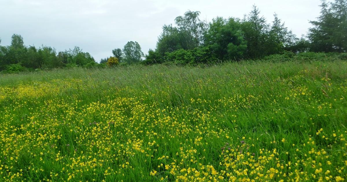 Crafty Green Poet Wildflower Meadows