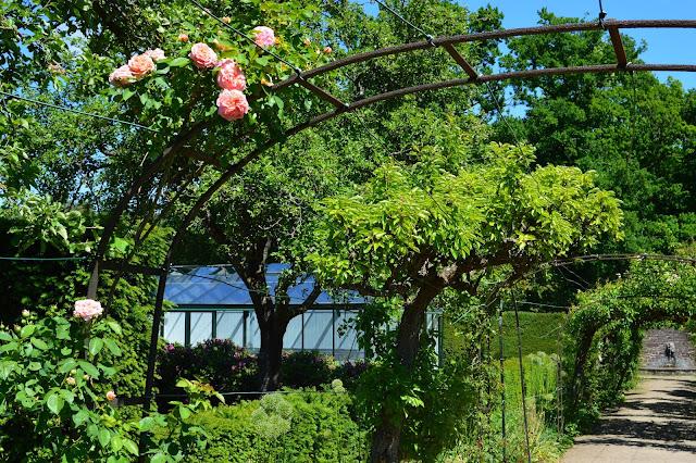 Espaljerte frukttrær