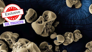 Manganese Eating Bacteria Image