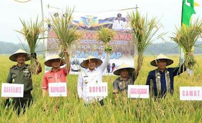 Bupati Batubara Akan Maksimalkan Produktivitas Padi Sawah