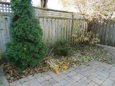 Toronto Greektown on the Danforth Fall Backyard Garden Cleanup before by Paul Jung Gardening Services