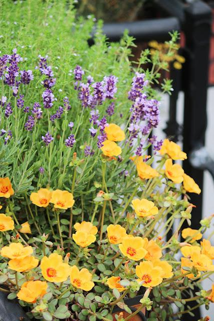 Windowbox herbs - marie viljoen