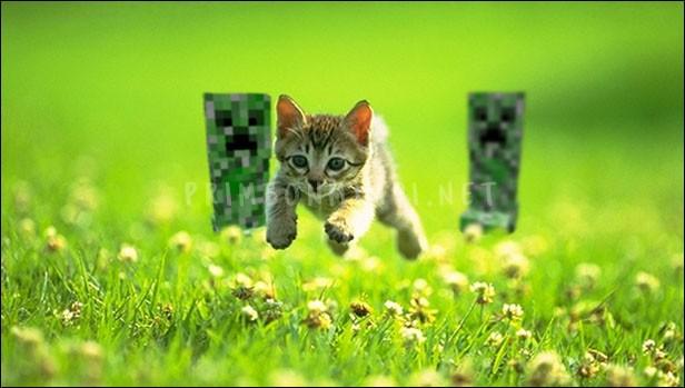 Mimpi Dikejar Kucing