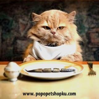 waktunya makan
