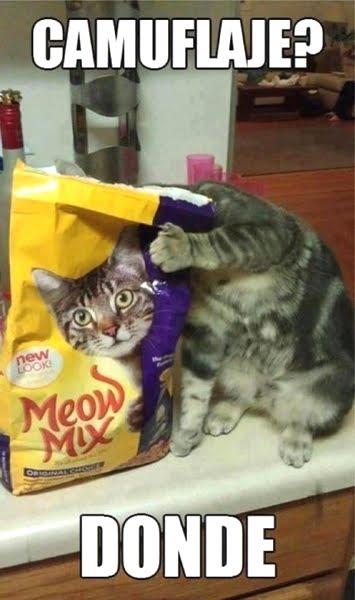 Imagenes Graciosas Chistosas Memes gatos