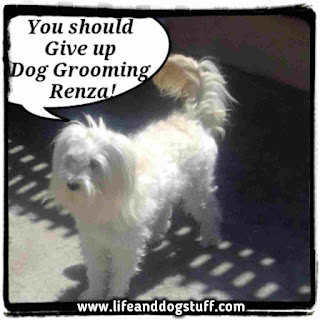 Fluffy groomed by Renza.