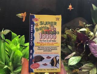 Bakteri Starter Super Battle Bacteria 10000