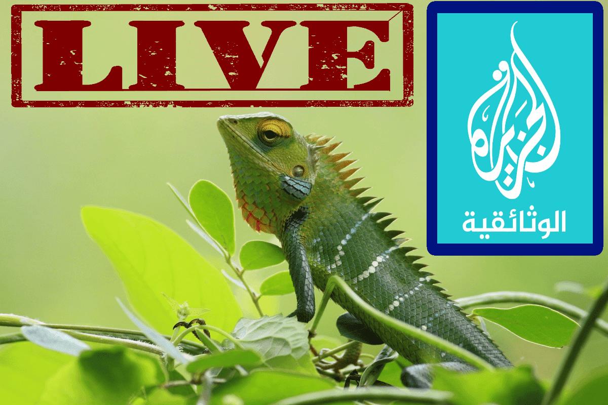 Live Stream Al Jazeera Documentary  البث الحي للجزيرة الوثائقية