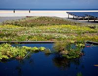 wetland%2Bgreen%2Broof.jpg