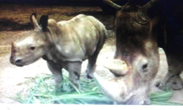 Rhino Package - Bali, Zoo, Rhino, Package, Sightseeing, Trip, Attraction, Safari and Marine Park