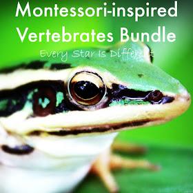 Montessori-inspired Vertebrate Bundle