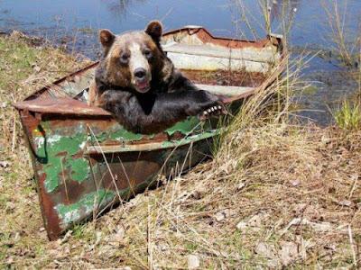 Bear in boat