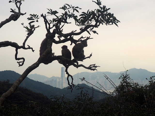 Monkey Mountain, New Territories, Hong Kong