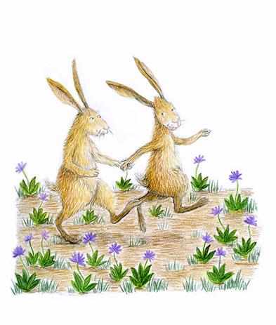 hares illustration yara dutra