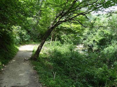 府民の森 ほしだ園地