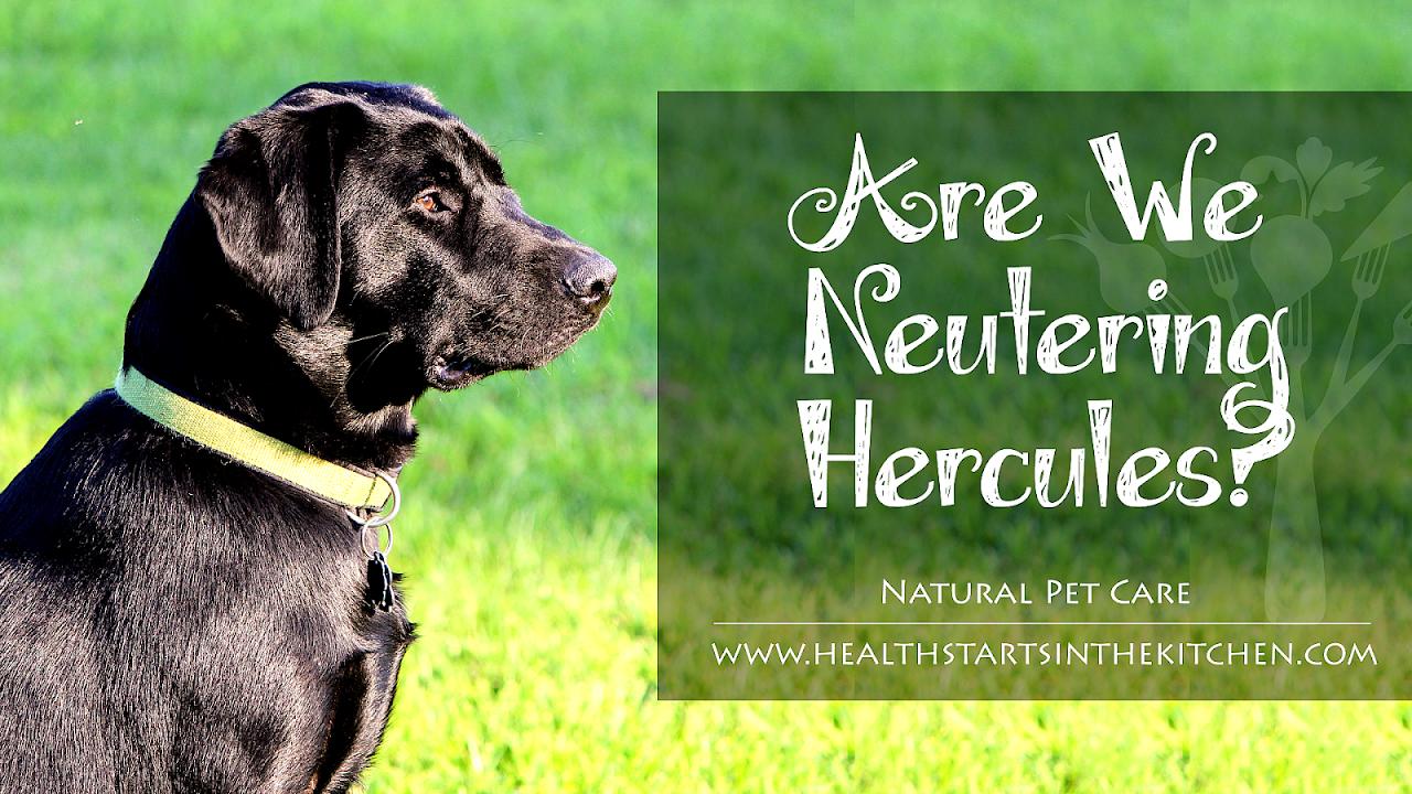 Neutering - Dog Neuter Recovery - Dog Choices