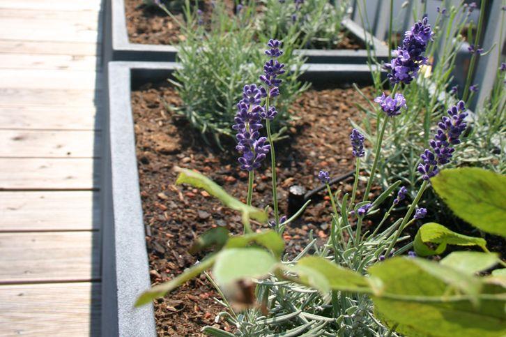 Bewässerung-Balkon-Dachterrasse-Steiermarkgarten