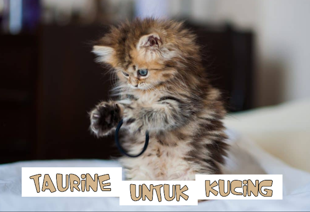 Makanan Kucing yang Mengandung Taurine