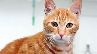 تفسير مشاهدة القطة في حلم العزباء