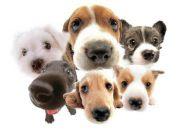 Puppies Point - Για τους πιστούς φίλους του ανθρώπου.