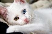 ٌٌإقرأ التمارين المفضلة لدى القطط