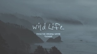 Wild Life Lyrics - OneRepublic