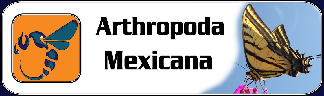 ARTHROPODA  MEXICANA