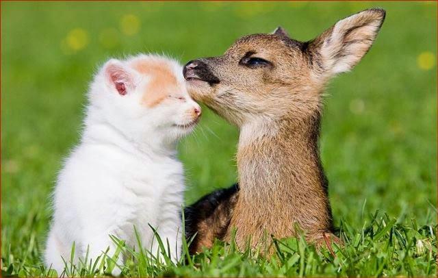 La recherche d'amitié sincère et fidèle, entre chat et gazelle