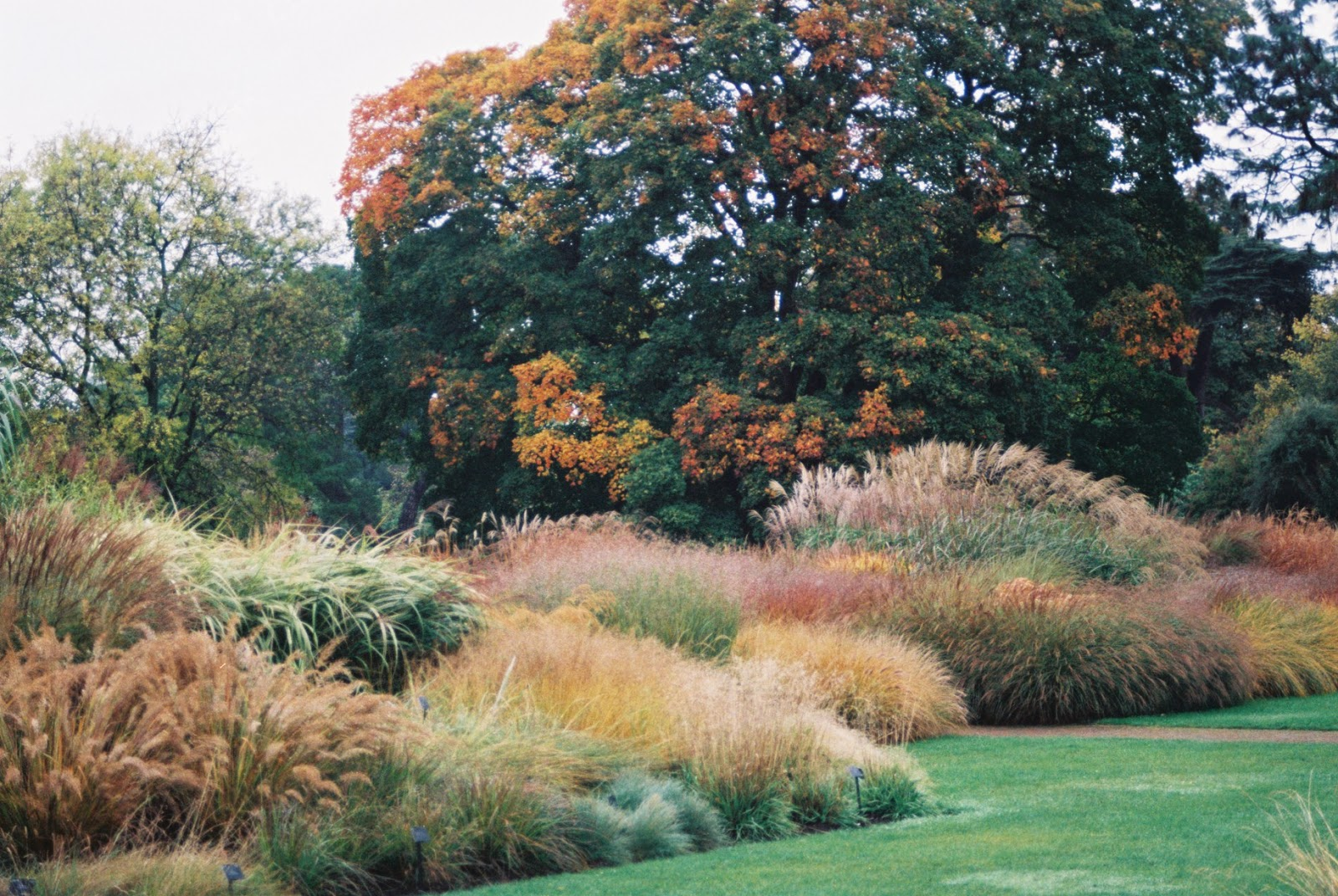 Photos by h glorious autumn colours kew for Garden ideas with ornamental grasses