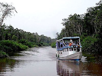 ranging from dense jungle to charming orangutans BaliTourismMap: Perfection of Central Kalimantan
