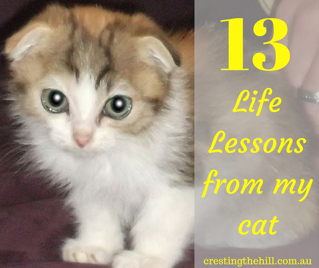 13 life lessons I've observed from owning a cat
