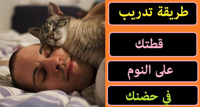"""""""كيف اجعل قطتي تحبني"""" """"كيف اخلي قطتي تنام بحضني"""" """"كيف اخلي قطتي تعرف اسمها"""" """"كيف اجعل قطط الشوارع تحبني"""" """"كيف اجعل القطط لا تخاف مني"""" """"كيف تجعل القط يأتي إليك"""" """"كيف أخبر قطتي اني احبها"""" """"كيف أعرف أن قطتي تحبني"""" """"كيف اخلي قطتي تسمع كلامي"""""""